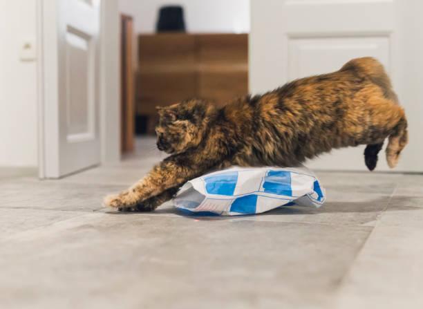 Playful cat picture id911777620?b=1&k=6&m=911777620&s=612x612&w=0&h=tvlsqluw2wuylsznbl9k03mp2flxqoucrntrgqu1iia=