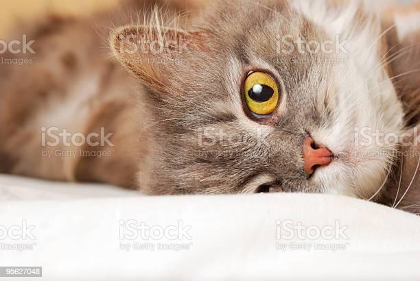 Playful cat picture id95627048?b=1&k=6&m=95627048&s=612x612&h=gapoygbn3quip8bkgcuri1af2q2yroxdzrfxmwh3mvw=