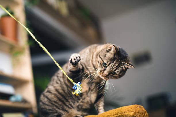 Playful cat picture id959095346?b=1&k=6&m=959095346&s=612x612&w=0&h= iibmoc0nnz qpjimenygrkqpzi7ufclzbifkc2iury=