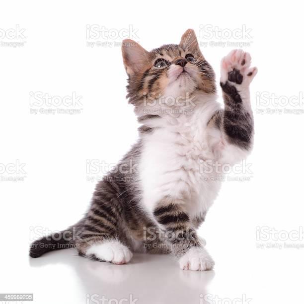 Playful cute kitty picture id459969205?b=1&k=6&m=459969205&s=612x612&h=8inx1vmr6el3osfv17w9u6mxtbbozsnjezslgler9r0=