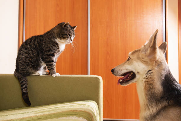 Playful dog and cat on sofa at home picture id1266463572?b=1&k=6&m=1266463572&s=612x612&w=0&h=uwnnaenvgxw4ytiwd8jkhd5ry3bf4tajjdqfhsj5usg=