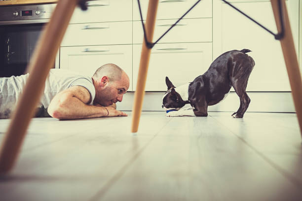Playful dog and her owner on the floor Playful dog and her owner human play on floor with dog stock pictures, royalty-free photos & images