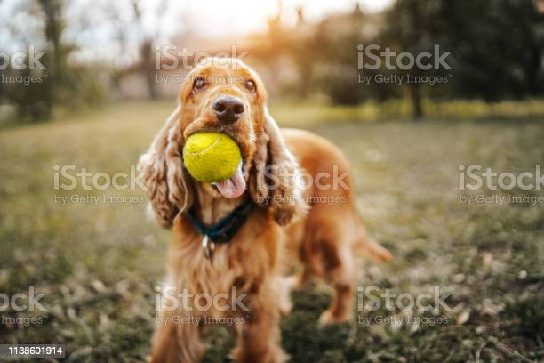 Playful dog picture id1138601914?b=1&k=6&m=1138601914&s=612x612&h=uvoaoj9d9kbaep3yjuunhbpgiih4ivki7ixrve7 4 e=