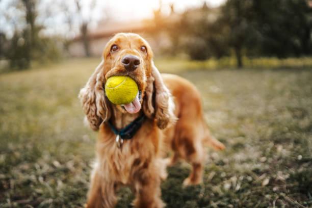 Playful dog picture id1138601914?b=1&k=6&m=1138601914&s=612x612&w=0&h=aojskvb4j6iq ybsgg5lviz7szjiuyf6kppj77vr8ts=