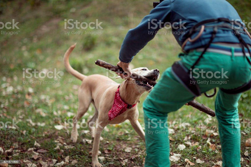 Adorable chien  photo libre de droits