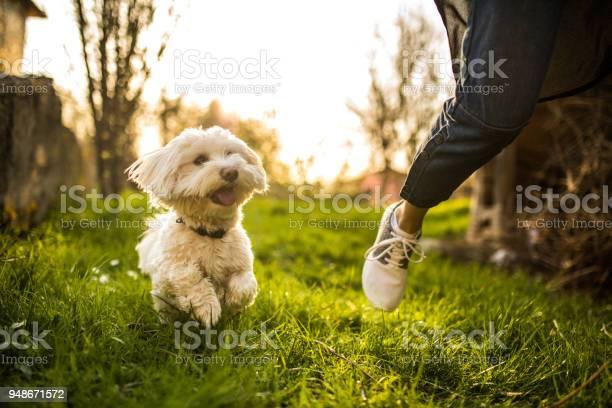 Playful dog picture id948671572?b=1&k=6&m=948671572&s=612x612&h=qyei9l7ghcetpoaidpr3nztj1u md1epk0uinj trqu=