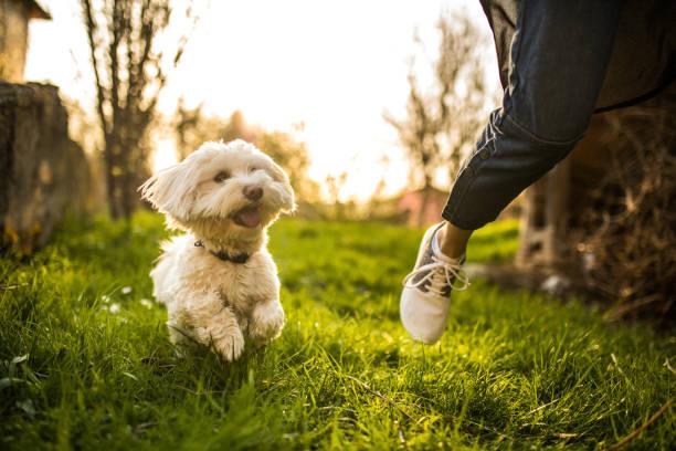 Playful dog picture id948671572?b=1&k=6&m=948671572&s=612x612&w=0&h=rn4swtrlqj7c3wborfv9 xgsujmmckp97xhxhgnfpku=