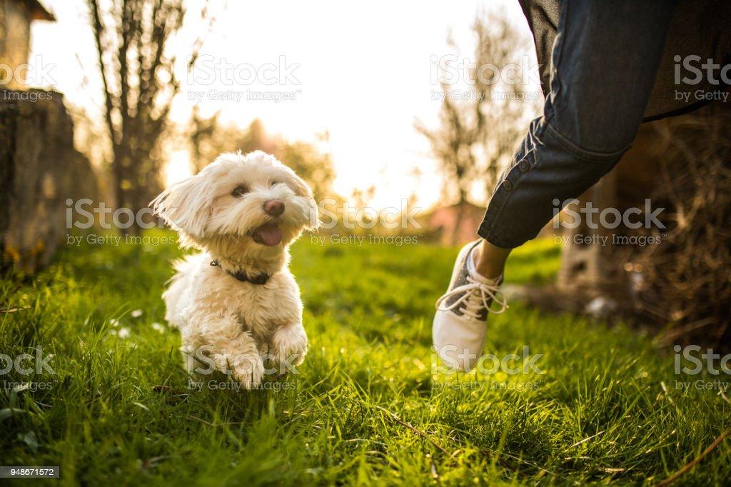 Playful dog stock photo