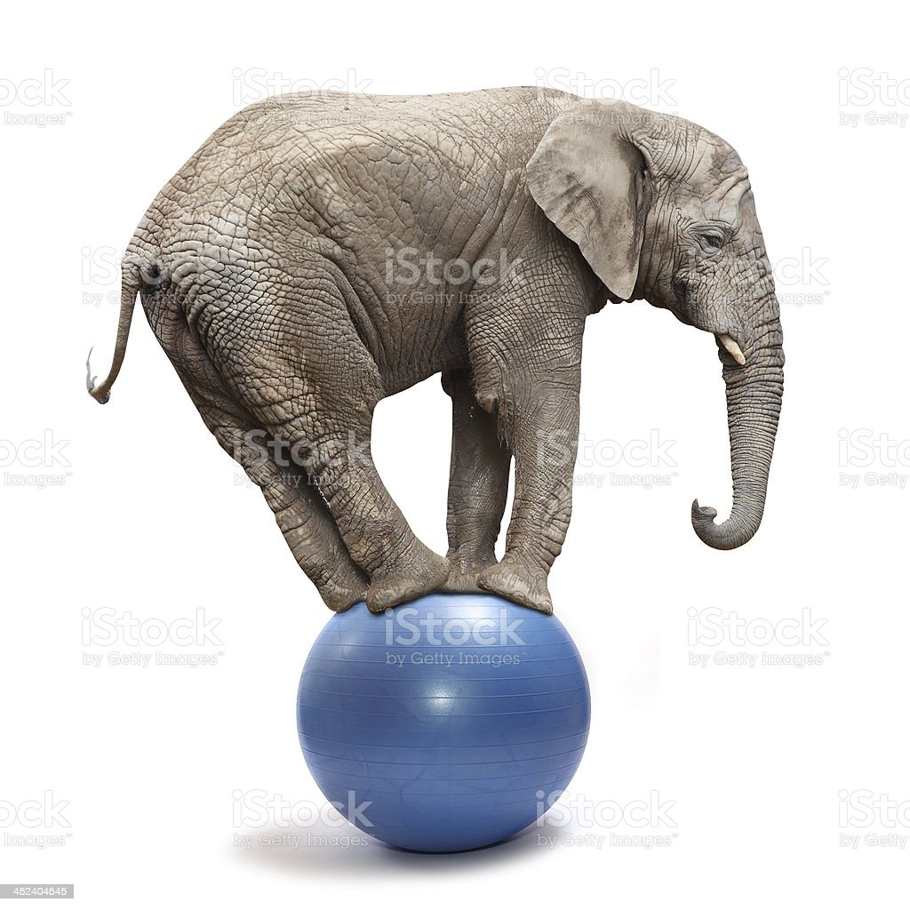 Playful elephant. stock photo