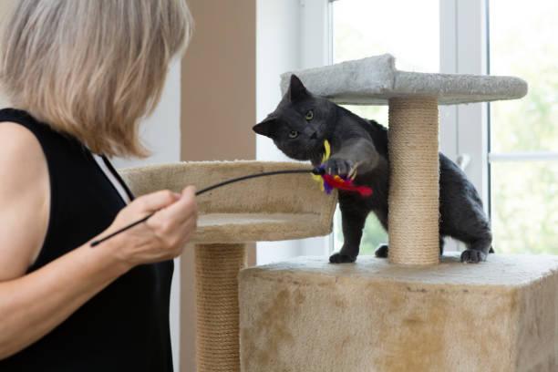 Playful gray shorthair cat picture id1036605710?b=1&k=6&m=1036605710&s=612x612&w=0&h=vxsarwx8fjwfzymvuwr5ddapxebyotqxaaqg8gopwqs=