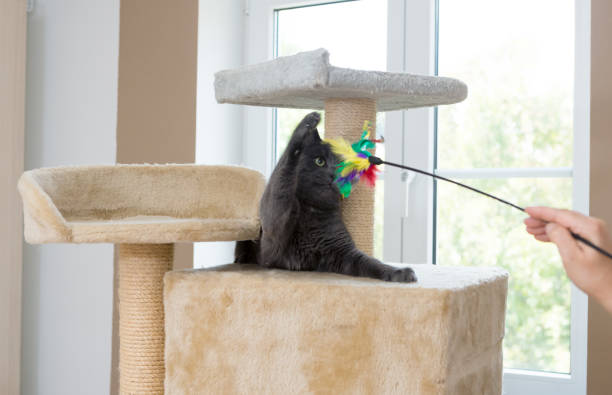 Playful gray shorthair cat picture id1039525528?b=1&k=6&m=1039525528&s=612x612&w=0&h=eknrerxancygnbeojxlljrx q7vxy8qg7pcxfgr0vpm=