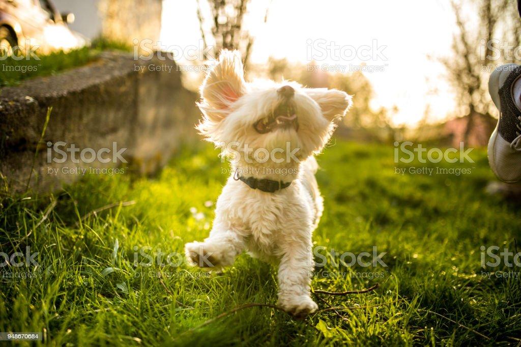 Playful happy dog stock photo