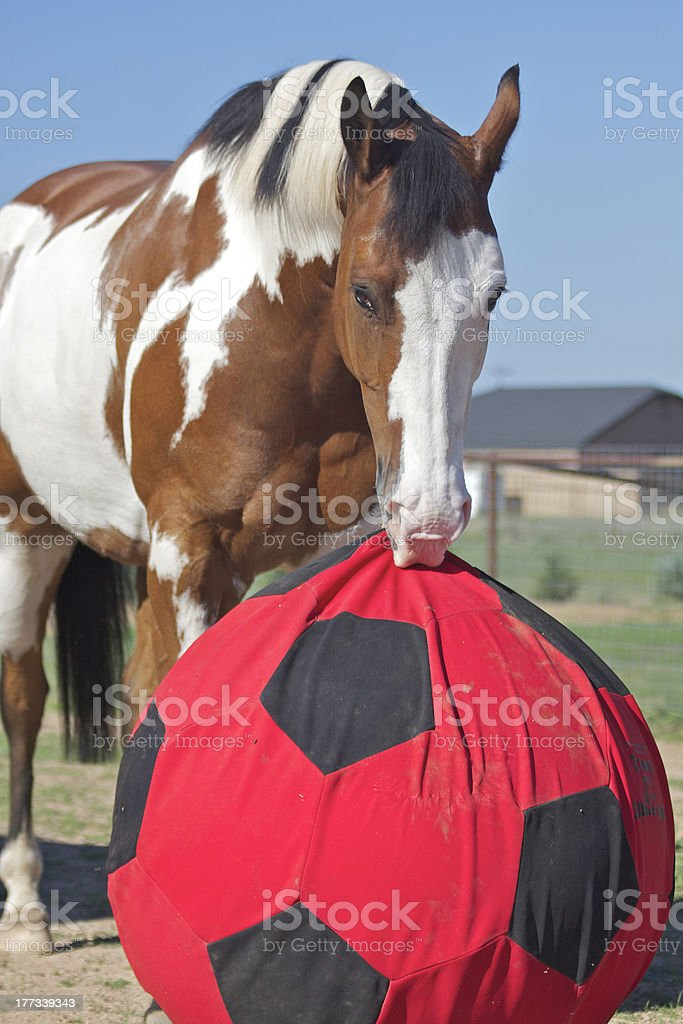 Playful Horse stock photo