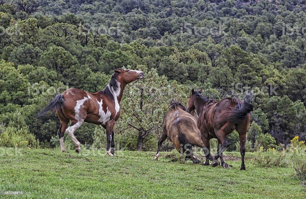 Playful Horses stock photo