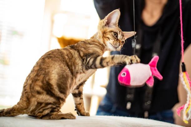Playful kitten catching a hanging fish pet toy stock photo picture id1220654175?b=1&k=6&m=1220654175&s=612x612&w=0&h=di9fuclsrtzwxzc2pbtfpqcvmg8hc4mwxp4hq7eqgia=