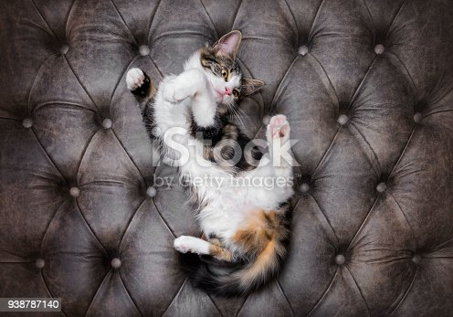 istock Playful kitten on a buttoned leather background 938787140