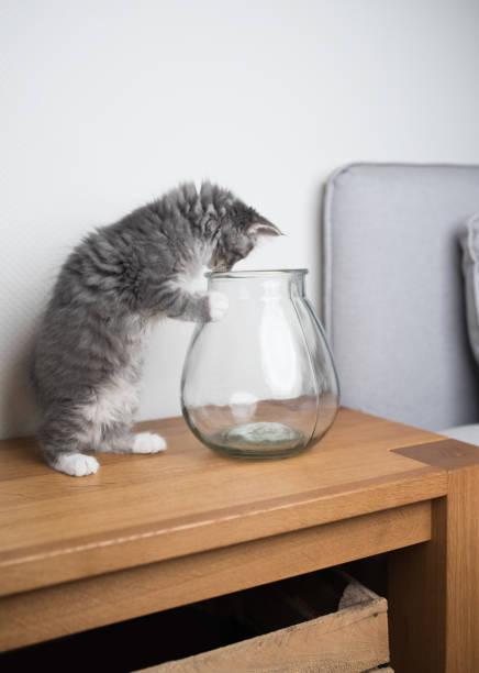 spielerisches kätzchen auf bank - grau getigerte katzen stock-fotos und bilder