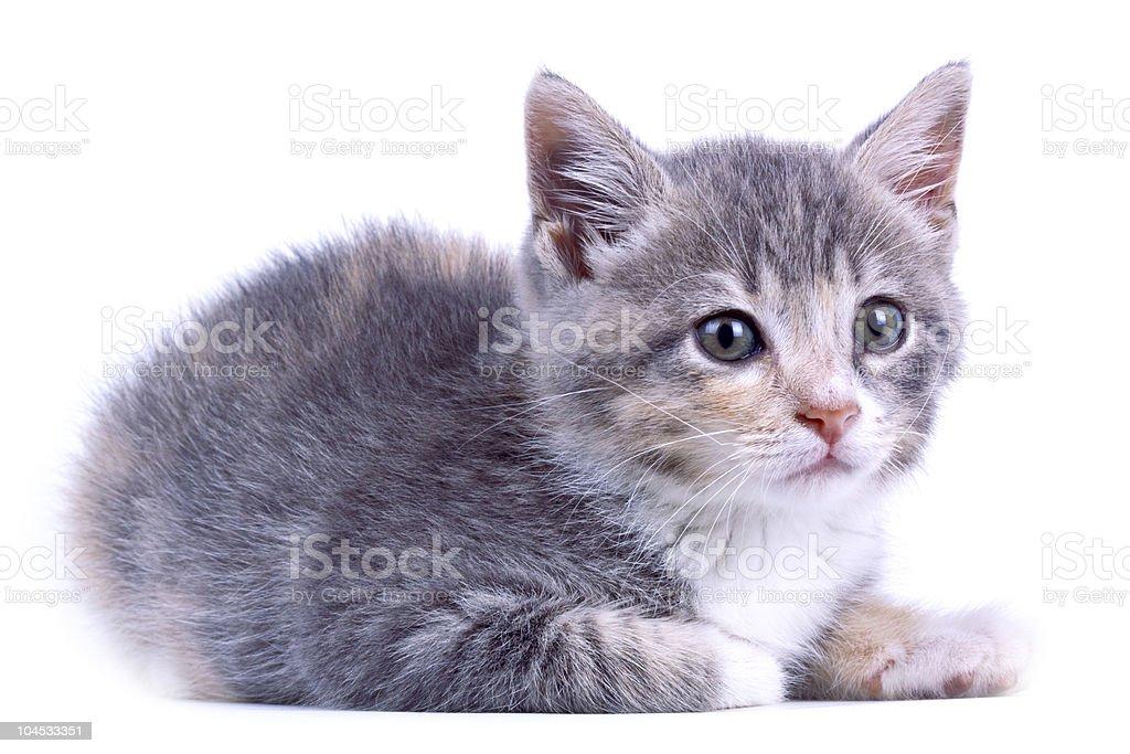 Playful kitten. royalty-free stock photo