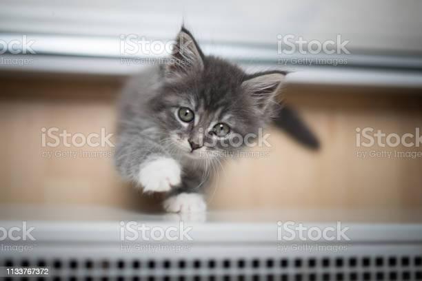 Playful kitten picture id1133767372?b=1&k=6&m=1133767372&s=612x612&h=juexps83vk tfiyg6ybez9vzhjzdhwjvsexbtapme2w=