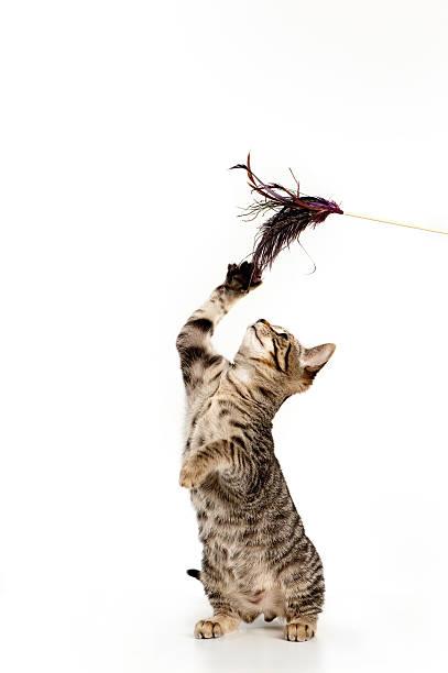 Playful kitten picture id163114140?b=1&k=6&m=163114140&s=612x612&w=0&h=ffw4 qytirbxuq0iplatttckeavujqs2lh nsvgnta8=