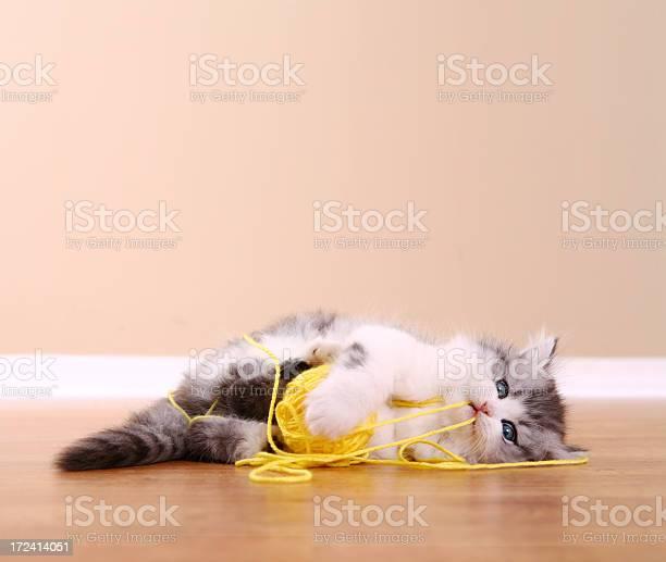 Playful kitten picture id172414051?b=1&k=6&m=172414051&s=612x612&h=ki2mz1j yoync2odt4hp7zxy ndlp4l28h2otp2taao=
