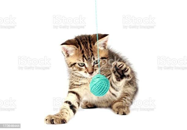 Playful kitten picture id172648444?b=1&k=6&m=172648444&s=612x612&h=8dub2pzbmbm8s27y fo7i30izuhkp4ewpt8kqnrojds=