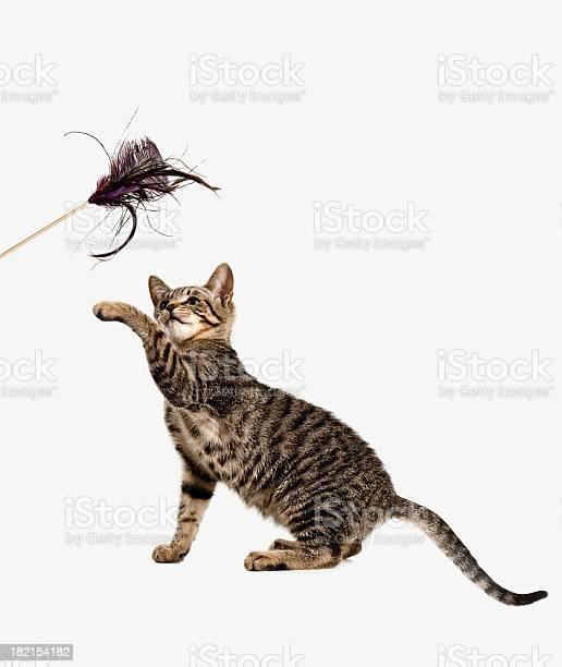 Playful kitten picture id182154182?b=1&k=6&m=182154182&s=612x612&h=q8vwxlwxhjljvbuas4m1mr pdadbhu4oktpugori0ya=