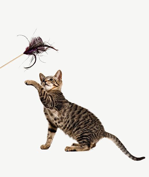Playful kitten picture id182154182?b=1&k=6&m=182154182&s=612x612&w=0&h=tzejbdeo9p0d31ewyo6dammwlohpelvsqwn6fjzn3so=