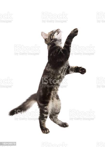 Playful kitten picture id183409579?b=1&k=6&m=183409579&s=612x612&h=w9pzfi4ozvskp4zyyx 241j3sp8k1cz99u6a6 qzpk4=