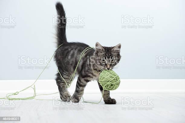 Playful kitten picture id464948021?b=1&k=6&m=464948021&s=612x612&h=vlhghfeyavoe narzb 2hf1 n32k67hmvgy4e34 yki=