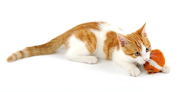 Playful kitten picture id518590210?b=1&k=6&m=518590210&s=612x612&w=0&h=ucr0x83btsu 1anee3sqpms48oczv tzfnevxyaosfm=