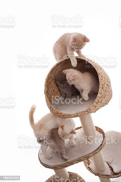 Playful kittens picture id183355034?b=1&k=6&m=183355034&s=612x612&h=5akl341ldb5u oarq7fmcwgulzgy7 lawqv 1rtd0wy=