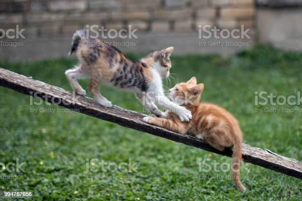 Playful kittens picture id994767656?b=1&k=6&m=994767656&s=612x612&h=vsrbd6cyulmigwak67oswr7wfz9ejunh 8fhsfwjrwi=