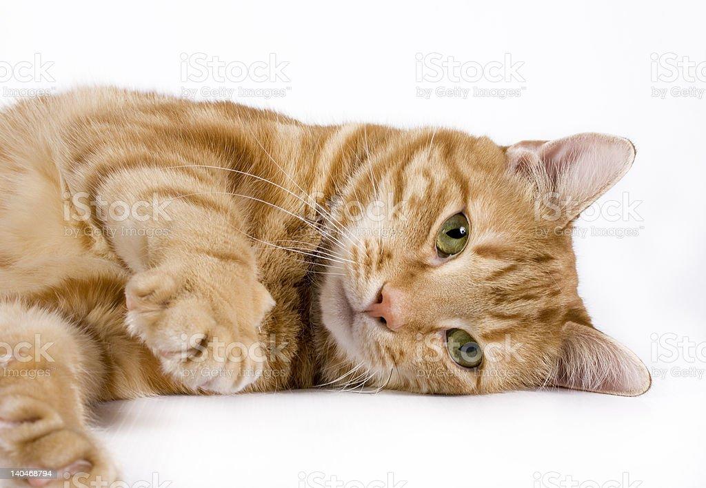 Playful kitty Cat stock photo
