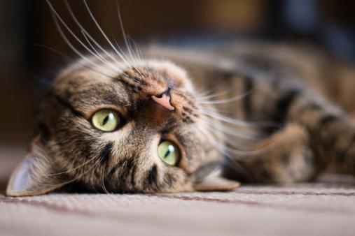 a kitten on its back