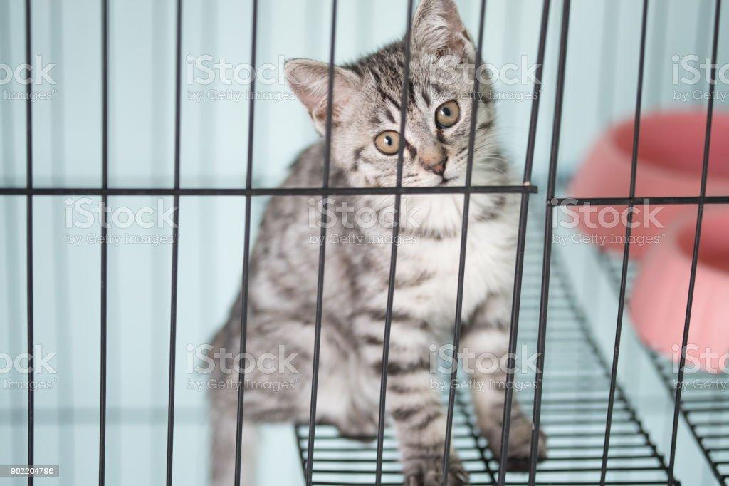 Playful kitty Cat Pound Kitty caged kitten Animal Stock Photo