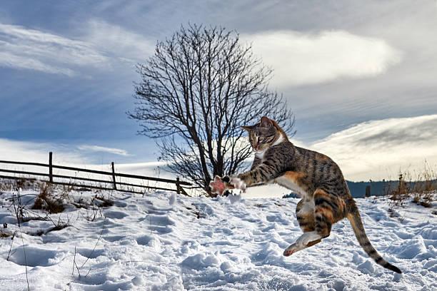 Playful kitty in the winter picture id636617064?b=1&k=6&m=636617064&s=612x612&w=0&h=dmaxjwramc7on7yrnacbvdmcphlvchpqtbi0sxcvswc=