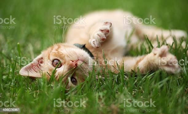 Playful kitty picture id456026961?b=1&k=6&m=456026961&s=612x612&h=fwo g0lab8glabfsh9jkrhtet1xrrvaxxvqf7jmmjhw=