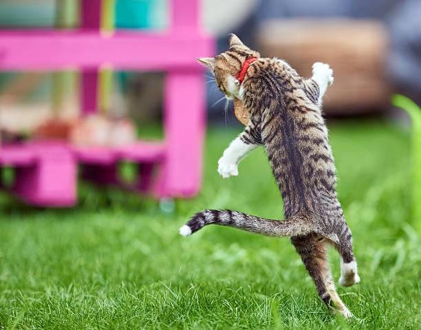 Playful kitty picture id543655530?b=1&k=6&m=543655530&s=612x612&w=0&h=p eq4dqpt7wpra25dmzssywwrokqdkgskvhuslgomu0=