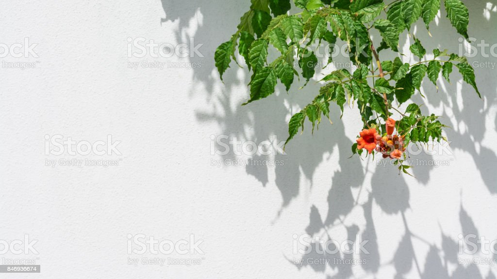 Playful light and shadow on a white background in HD ratio 16x9 stock photo
