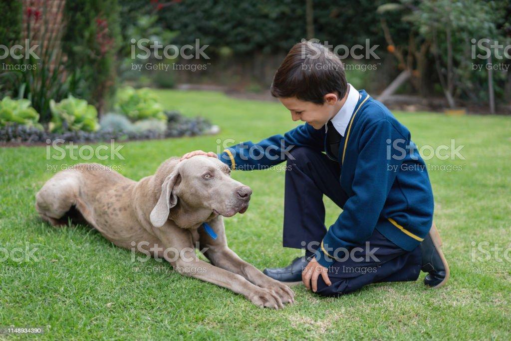Playful little boy stroking his pet at home backyard after school...
