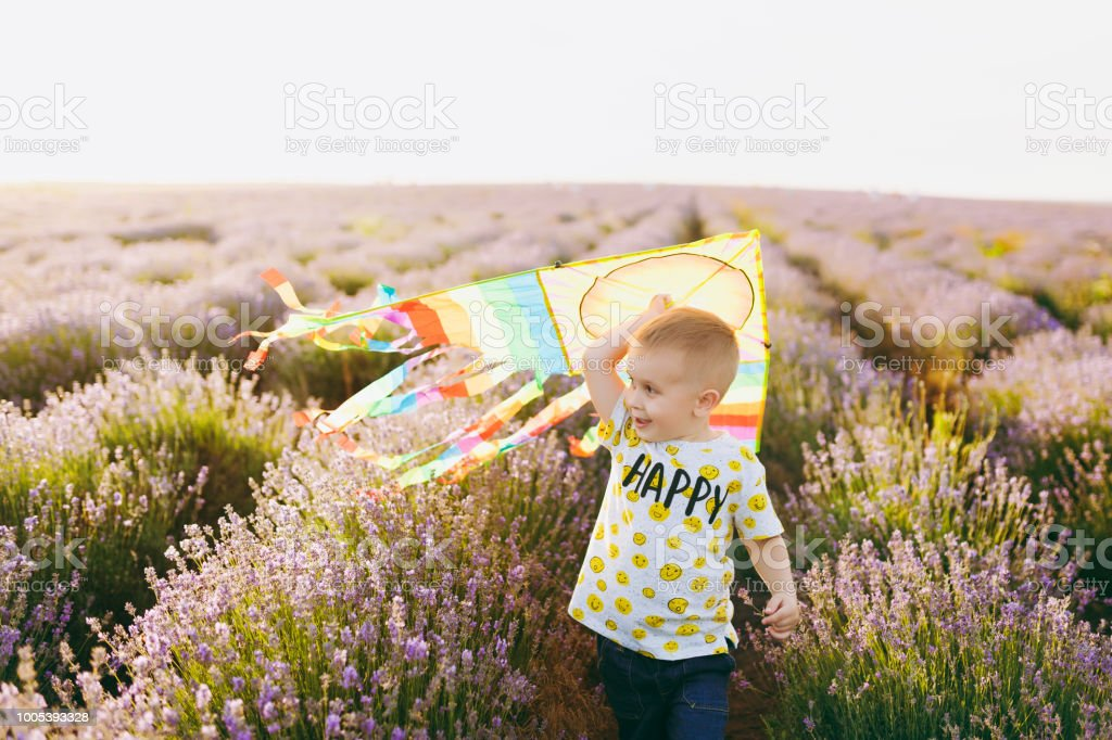 b2c051dfb Playful little cute child baby boy walk on purple lavender flower meadow  field, run, have fun, play with colorful kite, enjoy. Excited kid son.