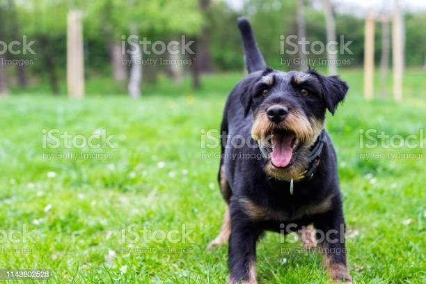 Playful little dog picture id1143602528?b=1&k=6&m=1143602528&s=612x612&h=pye44cmpsggphgllsgfan8wa5rylx2ppyyuj8c6gi9q=