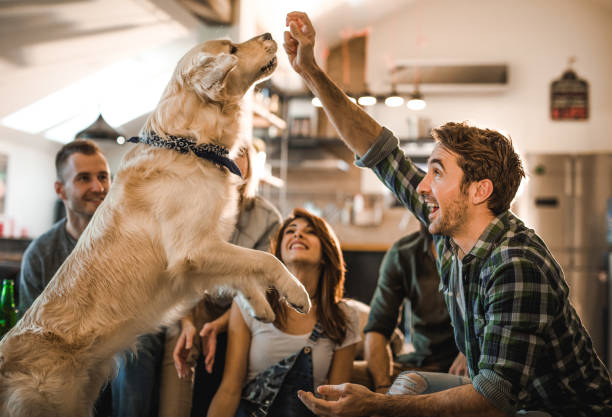 Playful man having fun with his dog at home with friends. Large group of young people enjoying in the apartment. Focus is on man teaching his dog tricks. animal tricks stock pictures, royalty-free photos & images