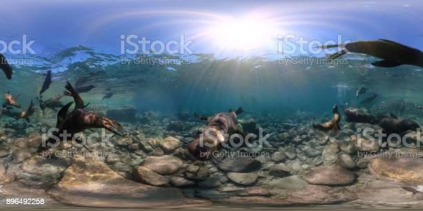 Playful sea lions in underwater 360 view picture id896492258?b=1&k=6&m=896492258&s=612x612&h=iaizv qyem8mikk1s647n8y4nypnuzfucrrbdonh1nu=
