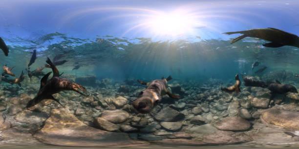Playful sea lions in underwater 360 view picture id896492258?b=1&k=6&m=896492258&s=612x612&w=0&h=vjpglxxbv48rs071thwgng0k71jhsfgdjknbim1j2ks=