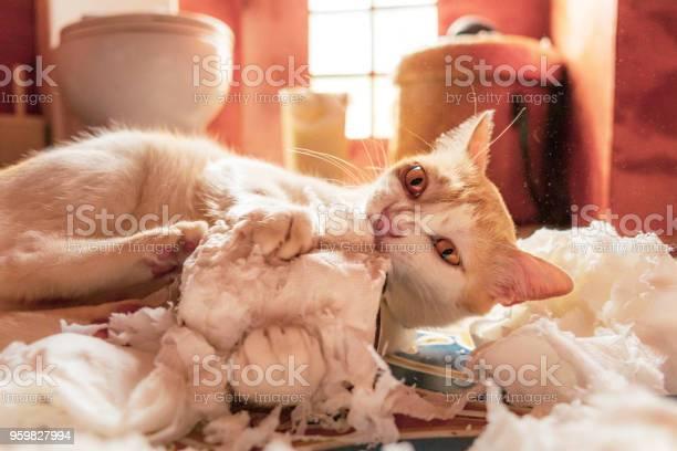 Playful silly cute pet cat destroying toilet paper picture id959827994?b=1&k=6&m=959827994&s=612x612&h=3rpltmlxxhtfhzacdcn vjmxvg5vmdmtb9pxtork pu=