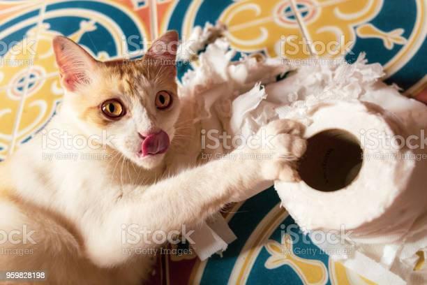 Playful silly cute pet cat destroying toilet paper picture id959828198?b=1&k=6&m=959828198&s=612x612&h=hoy c  khvdbijb tpmxbffgwnuaxwrj3nshn9zfef8=