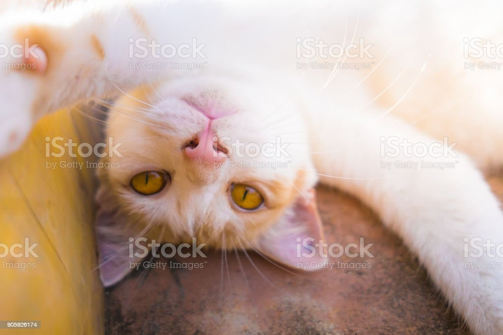 Playful silly cute pet Cat taking selfie stock photo