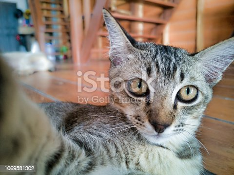 A young male cat is playfully reaching out towards the camera.  He is relaxed, mischievous and making a funny face.  His paws around the camera give the appearance he is taking a selfie photograph.  Image taken in Ko Lanta, Krabi, Thailand.